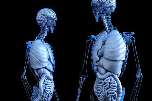 Ademhaling: overzicht van spieren die betrokken zijn!